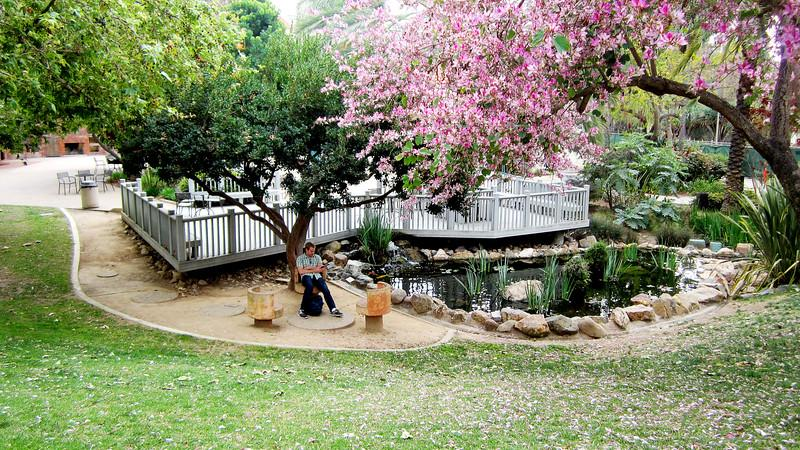 Student studying near the Scripps Cottage deck over the koi and turtle pond.